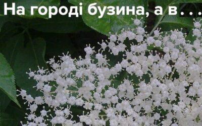 На Харьковщине агитационный плакат разместили на земельном участке… на втором этаже здания